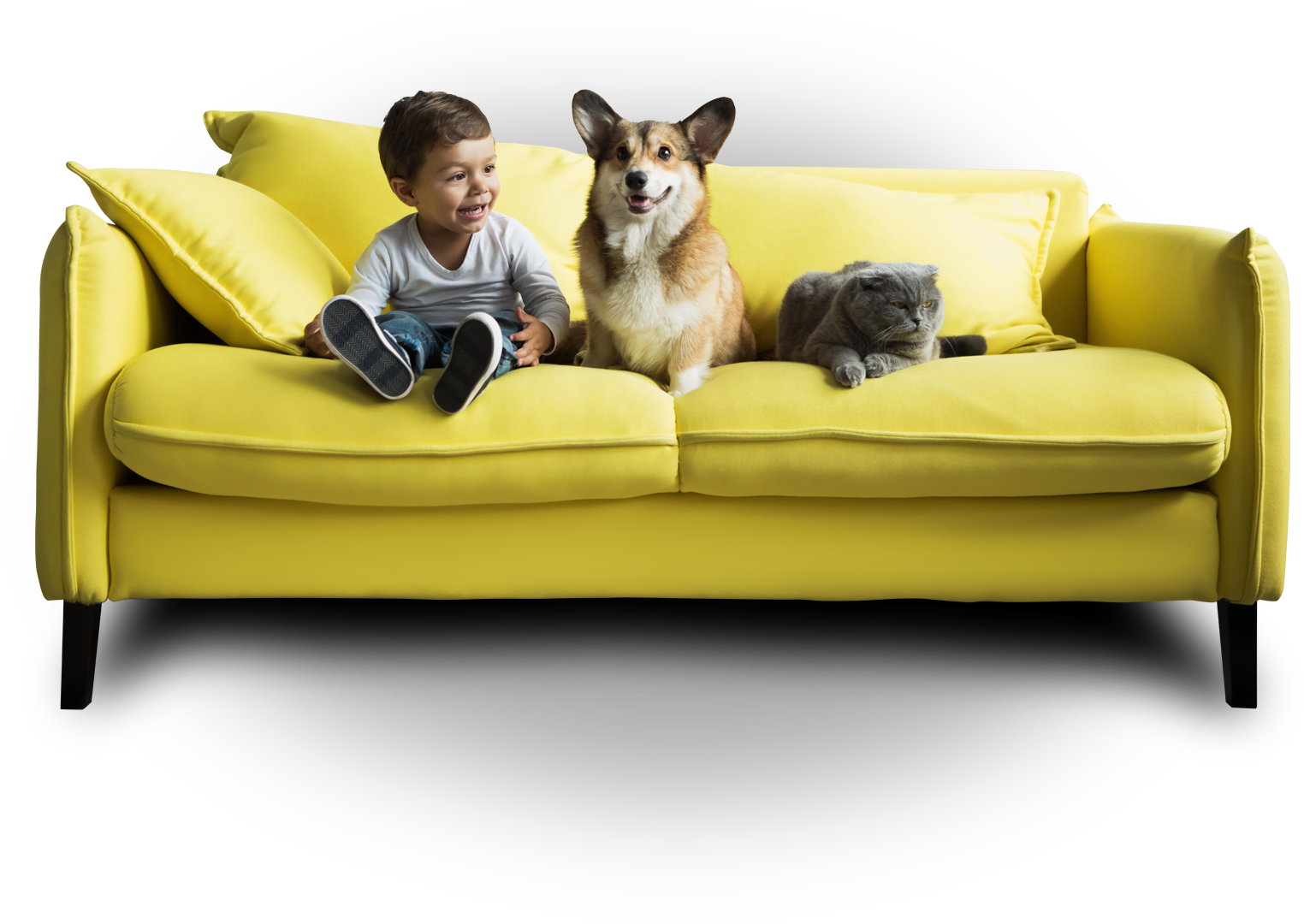 mold specialist phoenix - kid cat and dog sitting on yellow couch